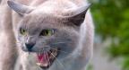 Feline supremacy